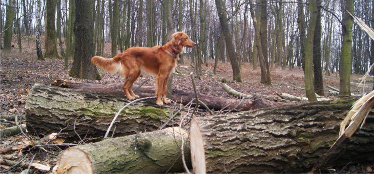 Księża Góra z psem