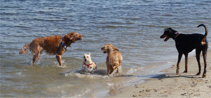 Dzierżno Duże w towarzystwie psów