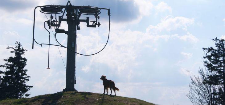 Kalenica – szczyt do zdobycia z psem