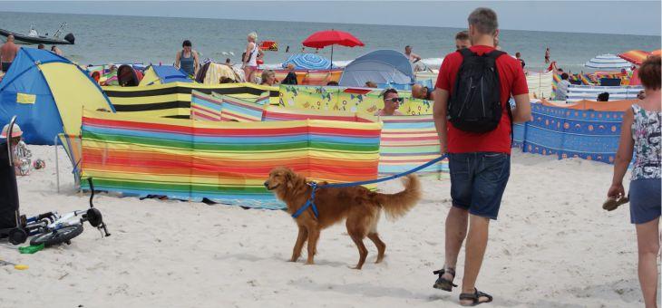 Plaża dla psów w Łebie