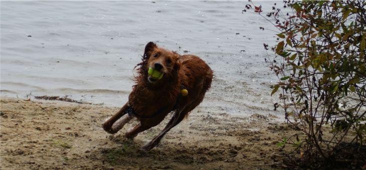 Jezioro Rybnickie na spacer z psem