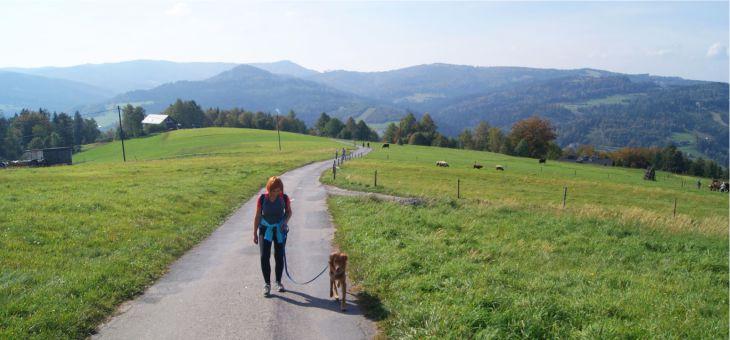 Spacer z psem na Trzy Kopce Wiślańskie