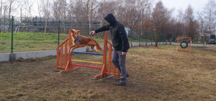 Wybieg dla psów w Rybniku – Boguszowicach