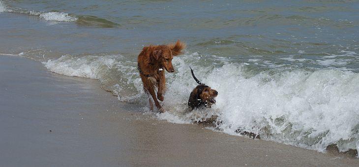 Plaża dla psów w Jastarni