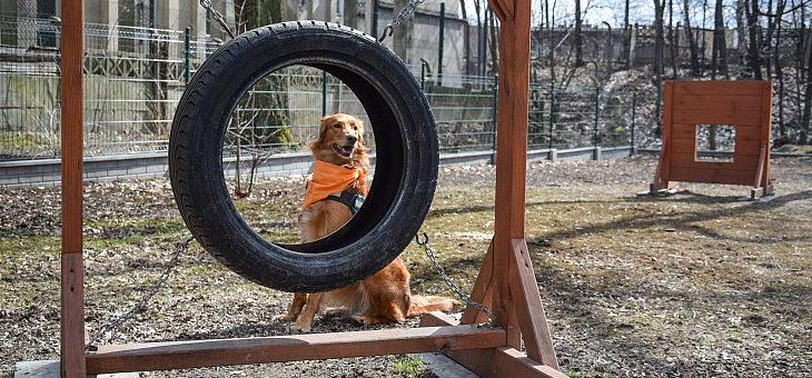 Wybieg dla psów Rybnik – Chwałowice
