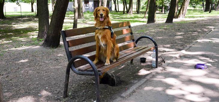 Wybieg dla psów w Krakowie (Park Kleparski)