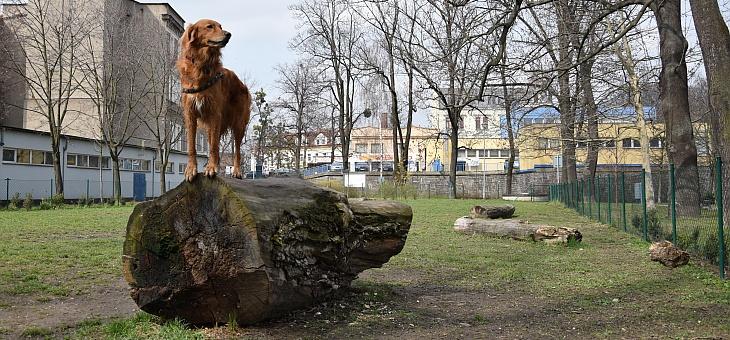 Wybieg dla psów w czeskim Cieszynie
