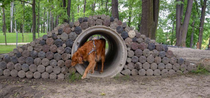 Wybieg dla psów w Świdnicy