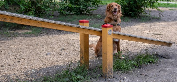 Wybieg dla psów Parku Róż w Chorzowie