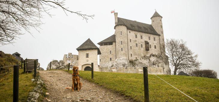 Mirów i Bobolice na wypad z psem