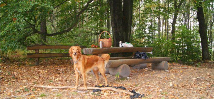 Po lesie z psem