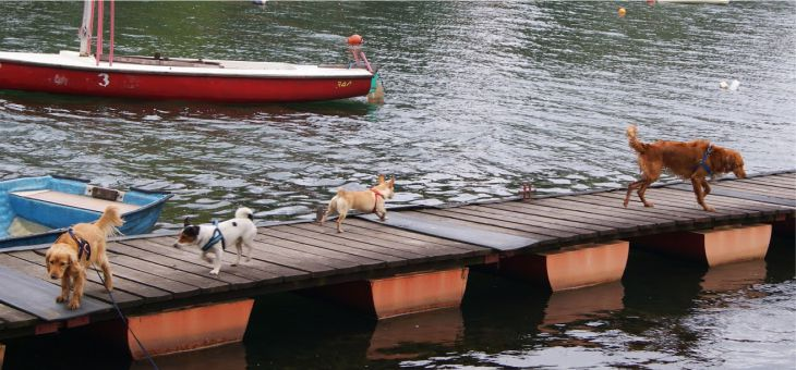Tija i przyjaciele nad jeziorem Chechło – Nakło