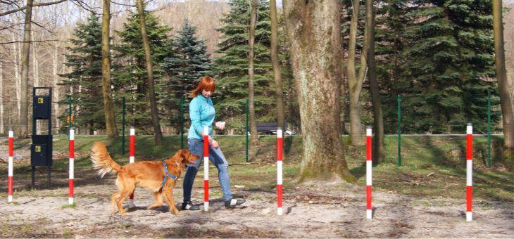 Park dla psów w Ustroniu