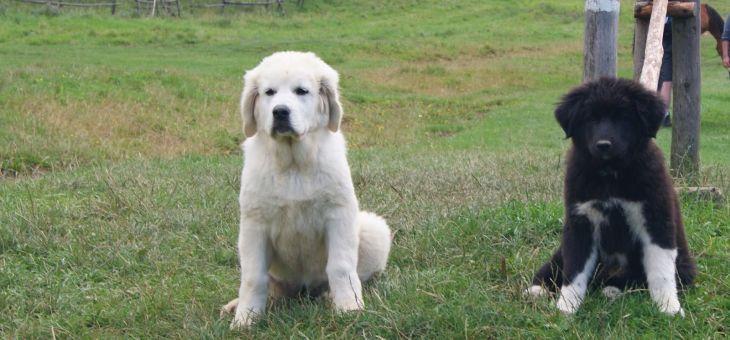 Biała Woda na wypad z psem