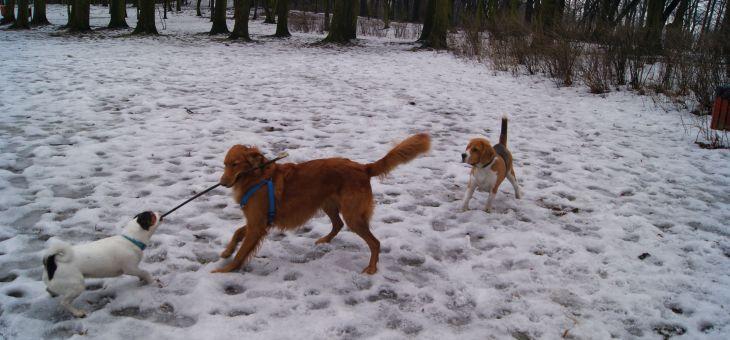 Wybieg dla psów w Bytomiu