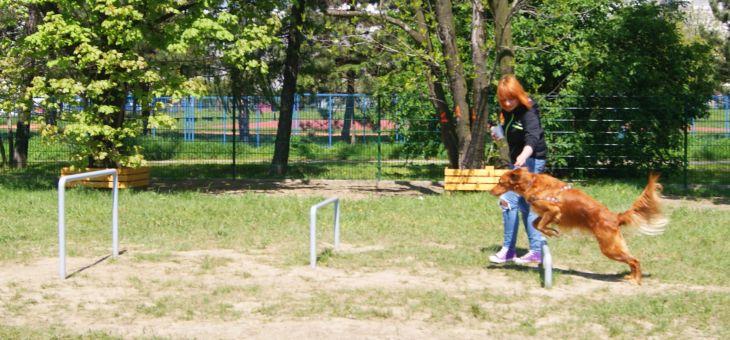 Wybieg dla psów w Gliwicach