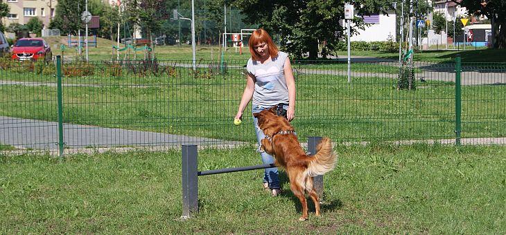 Wybieg dla psów w Gdyni