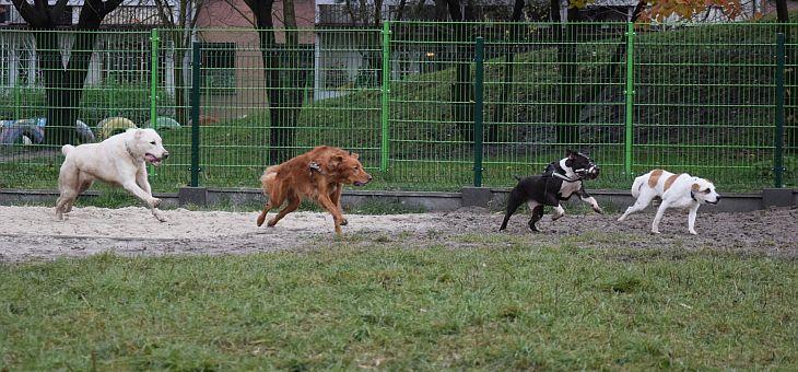 Wybieg dla psów Gliwice – Trynek