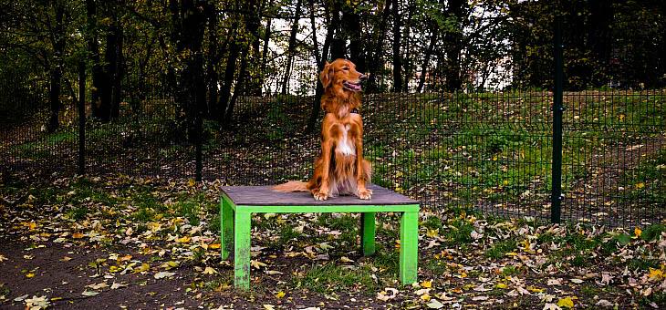 Wybieg dla psów w Siemianowicach Śląskich