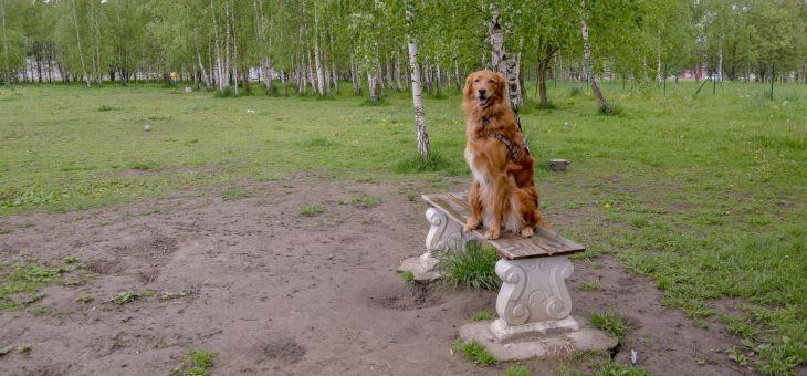 Wybieg dla psów w Jeleniej Górze