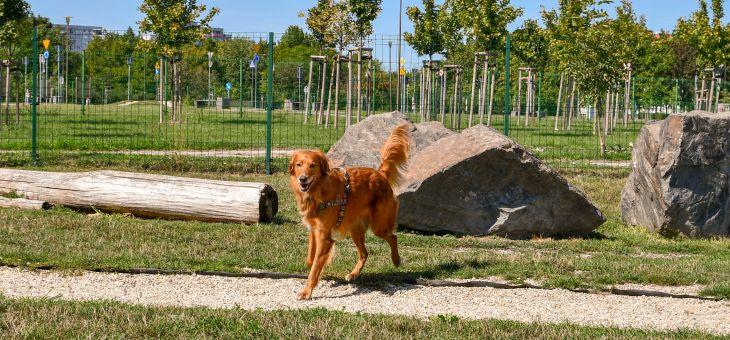 Park dla psów w Opolu
