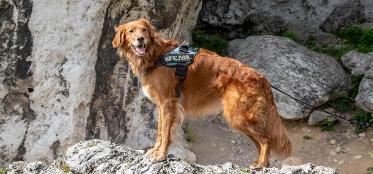 Rezerwat Góra Zborów z psem