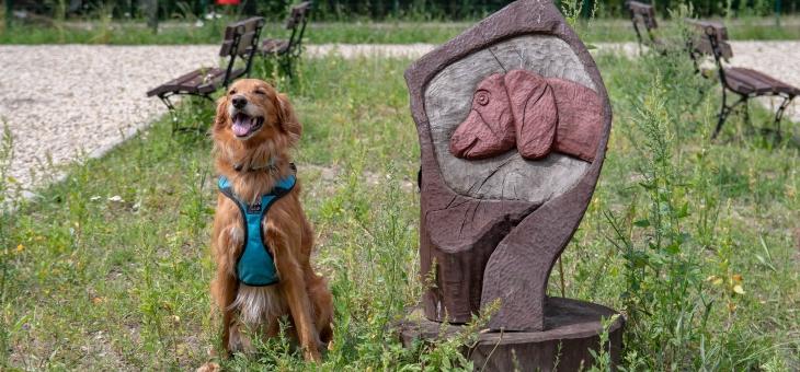 Wybieg dla psów w Radzionkowie