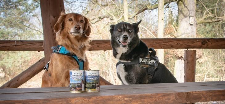 Korona Beskidu dla wszystkich psów